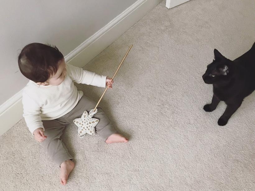 ベビーと猫