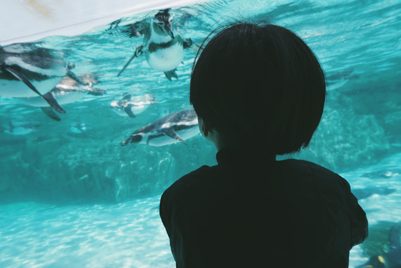 水族館。ペンギンをしたから見られる。。。私もここ、好きだよ